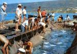 La pesca in Puglia