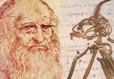 Svelato il mistero della balena di Leonardo