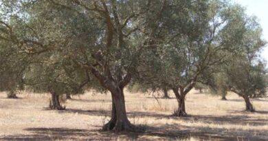L'Europa è pronta a estendere l'agroecologia?