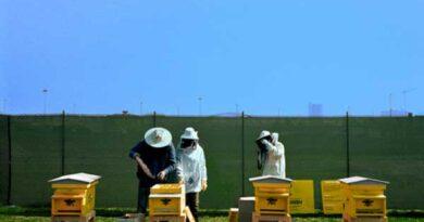 Oltre 1 milione di api a Milano